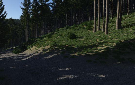 Terragen: ein Waldweg im Nationalpark Eifel (2011)